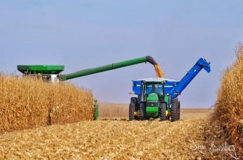 NE Corn Harvest