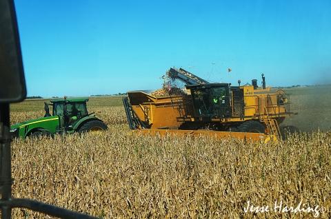 Seed Corn Harvesting