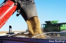 Soybean Dump