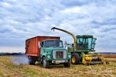 Silage Picking